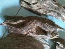 عود غطاس underwater agarwood